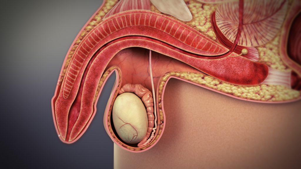zaburzenia-erekcji-leczenie Czym są zaburzenia erekcji?