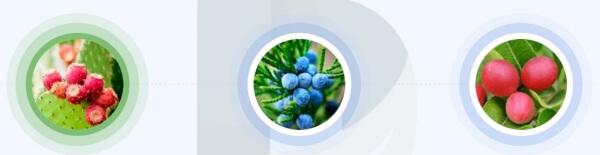 Jakie składniki zawiera Piperine Forte?